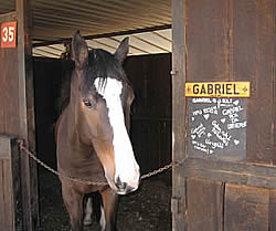 Acupuncture Treatment in horses - Gabriel